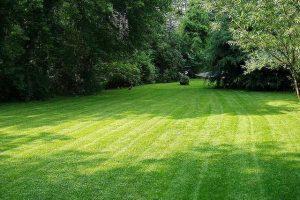 What a lawn