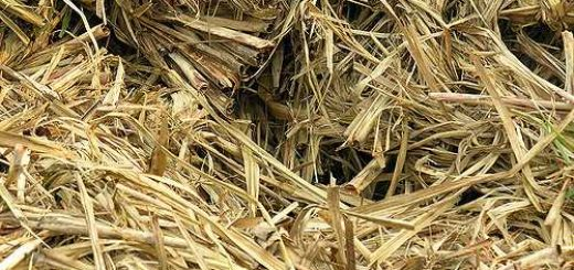 Bagasse, Sugarcane, Meerut, Uttar Pradesh