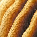 10 Ways To Use Beeswax In Your Household